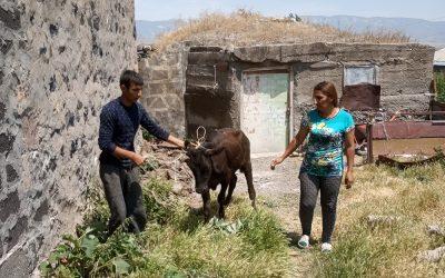 Van haring naar kalveren en schapen